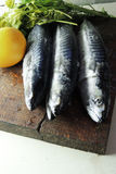 Fresh mackerel. Two raw fresh mackerel fishes on a paper old wooden table Royalty Free Stock Photos