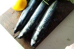 Fresh mackerel. Two raw fresh mackerel fishes on a paper old wooden table Royalty Free Stock Photo