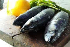 Fresh mackerel. Two raw fresh mackerel fishes on a paper old wooden table Stock Images