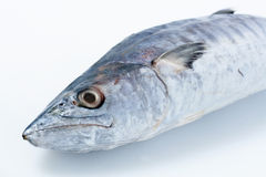 Fresh Mackerel on White. Raw Fresh Mackerel close-up Stock Image
