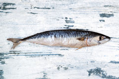 Fresh mackerel on white wooden background. Royalty Free Stock Photo