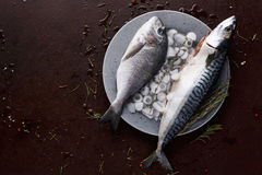 Fresh mackerel on wooden board at black background Royalty Free Stock Image
