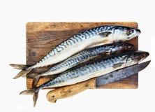 Fresh mackerels Royalty Free Stock Image
