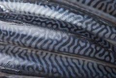 Fresh mackerels Stock Photos