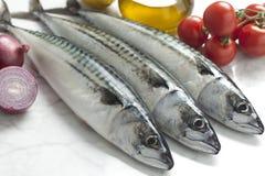 Fresh mackerels Royalty Free Stock Photography