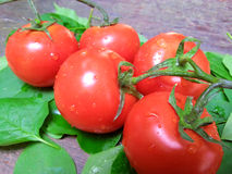 Fresh macro tomatoes Stock Photos