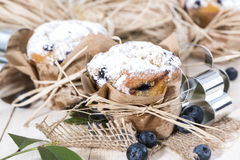Fresh made Blueberry Muffins Royalty Free Stock Photo