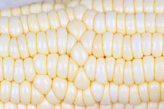 Fresh maize cob Royalty Free Stock Image