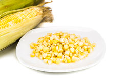 Fresh maize cob and kernels on plate against white background Stock Images