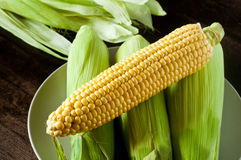 Fresh Maize Stock Image