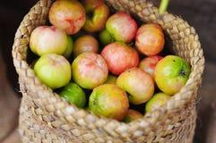 Fresh Malpighiaceae fruit or cherry in burlap sack Stock Images