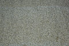 Fresh malt texture. Textured surface of young malt seeds in the elevator royalty free stock image