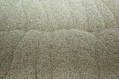 Fresh malt texture. Textured surface of young malt seeds in the elevator stock images