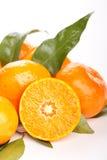 Fresh mandarin fruits Royalty Free Stock Photography