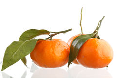 Fresh mandarin fruits Stock Photo