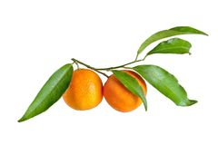 Fresh mandarin with leaf isolated on white Royalty Free Stock Photography