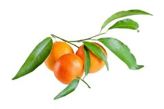 Fresh mandarin with leaf isolated on white Royalty Free Stock Photo