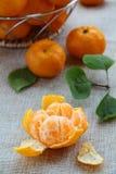 Fresh mandarin orange Stock Image