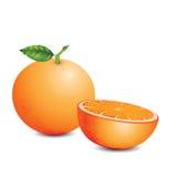 The fresh mandarin orange. Mandarin oranges, fresh concept art for the paperwork Royalty Free Stock Image