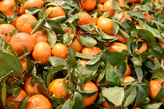 Fresh mandarin oranges with leaves Stock Photo