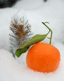 Fresh mandarine Stock Photo