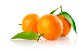Fresh mandarine fruits with green leaves isolated. On white background royalty free stock image