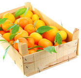 Fresh mandarins Stock Photos