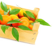 Fresh mandarins Royalty Free Stock Image