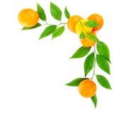 Fresh mandarins border Royalty Free Stock Image