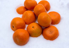 Fresh  mandarins  in the snow Stock Images