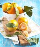 Fresh mandarins Royalty Free Stock Photography