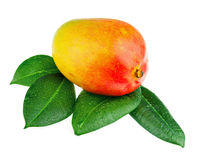 Fresh mango fruit with green leaves isolated on white background Royalty Free Stock Photos
