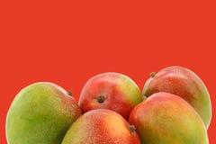 Fresh mango fruits Stock Images