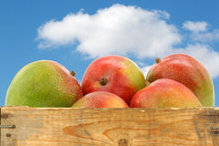 Fresh mango fruits in a wooden crate Stock Photography
