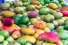 Fresh Mango: green, red, yellow in the local Stock Photography