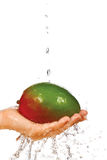 Fresh mango in hand under flowing water Stock Image