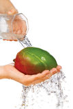 Fresh mango in hand under flowing water Stock Images