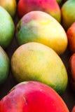 Fresh Mango. Rows of fresh, colorfull, ripe whole Mango Stock Photo