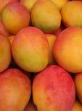 Fresh Mangoes at a Farmers Market. A display of whole, fresh, in season mangoes at a Farmers Market Royalty Free Stock Photos