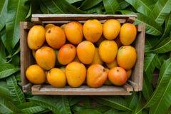 Fresh mangoes fruit in wooden basket harvest from organic farm stock photos