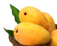 Fresh Mangoes Stock Photos