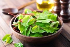 Fresh mangold leaves, swiss chard or leaf beet Stock Images