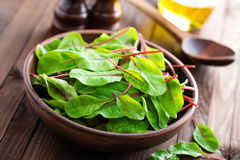 Fresh mangold leaves, swiss chard or leaf beet. Close up royalty free stock photos