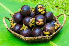 Fresh mangosteen on banana leaf Royalty Free Stock Images