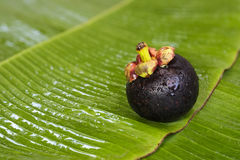 Fresh Mangosteen on banana leaf. Queen of fruit in Thaland Stock Photo