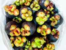 Fresh mangosteen in the big plastic bags for wholesale. Fresh mangosteen from fruit  orchard pack in the transparent big plastic bags for wholesale Stock Image