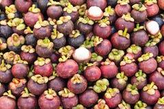 Fresh mangosteen fruit Stock Images