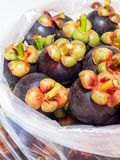 Fresh mangosteen in the big plastic bags for wholesale. Fresh mangosteen from fruit  orchard pack in the transparent big plastic bags for wholesale Royalty Free Stock Images