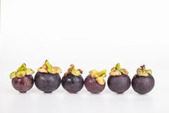 Fresh mangosteen fruit Stock Photos