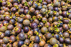 Fresh Mangosteen Stock Photos